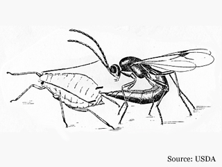 Computerized Biological Control illustration